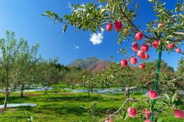 青森県の外国人雇用の現状